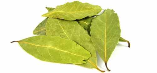 лавровый лист от аллергии: лечение в домашних условиях