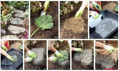 садовая кампанула: уход, посадка, размножение